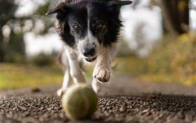 Nie bądź psem ogrodnika!